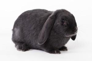 rabbit-694919_640