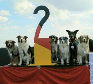 dfm16_dogs